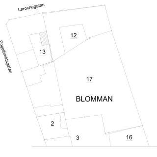 Blomman